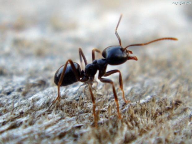 Jak pozbyć się domowych insektów: mrówek, moli, rybików cukrowych, Fumigacja, Kontrola szkodników, Gliwice, Śląsk