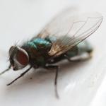 BIOLOGICZNE METODY ZWALCZANIA MUCH: BIOMUCHY, Kontrola szkodników, Gazowanie, Zabezpieczenie przed ptakami, Gliwice, Śląsk