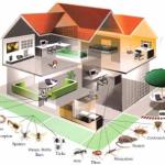 System kontroli szkodników, Dezynsekcja, Odszczurzanie, Zabezpieczenie przed ptakami, Gliwice, Śląsk