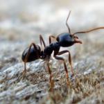 Jak pozbyć się domowych insektów: mrówek, moli, rybików cukrowych, Gazowanie, Odszczurzanie, HACCP, Gliwice, Śląsk
