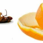Dezynsekcja - Żelowanie, Dezynsekcja, Fumigacja, Likwidacja zapachów, Gliwice, Śląsk