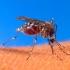 Siedem roślin, które odstraszają komary i muchy, Kontrola szkodników Gliwice, Odszczurzanie Wronki, Gliwice, Śląsk