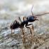 Jak pozbyć się domowych insektów: mrówek, moli, rybików cukrowych, Bezpieczna deratyzacja Gliwice, Zabezpieczenie przed ptakami Prudnik, Gliwice, Śląsk